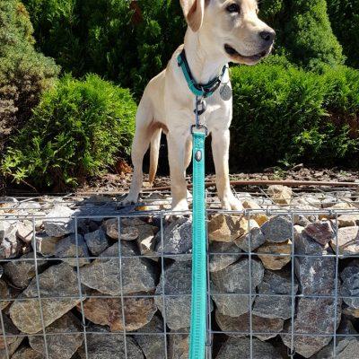 Стена от габиони с куче